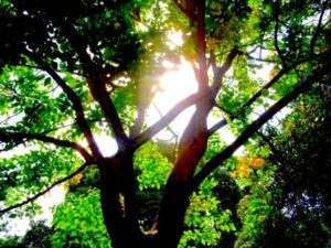 amritayoga.com_Automated-eNews_Ammas Green Initiatives